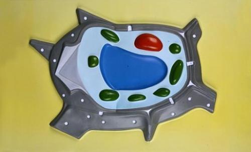 """Барельефная модель по ботанике """"Растительная клетка"""""""