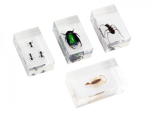 Набор насекомых 1 (Экспонаты в акриле)