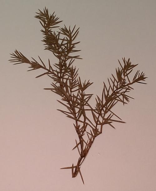"""Гербарий """"Дикорастущие растения"""" (28 видов)"""
