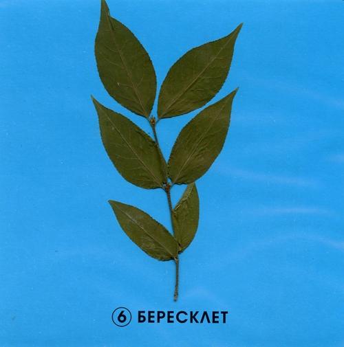 """Гербарий """"Растительные сообщества"""" (9 видов х 5 планшетов)"""