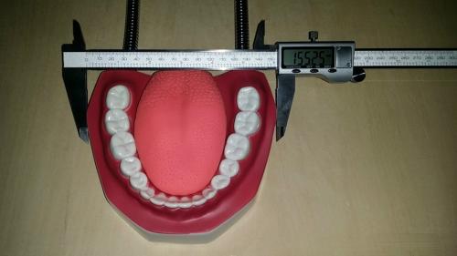 """Модель """"Гигиена зубов"""" (БЕЗ ЩЕТКИ)"""