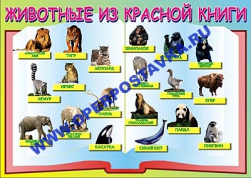 """Виниловая таблица """"Животные красной книги""""  100х140 см"""