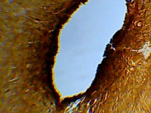 """Видеоокуляр с программным обеспечением к микроскопу """"Микромед"""""""