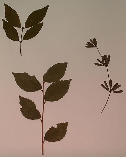 """Гербарий """"Морфология растений"""" (5 тем х 3 листа)"""