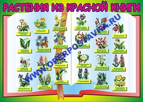 """Виниловая таблица """"Растения красной книги"""" 100х140 см"""