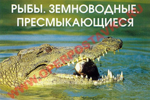 """Слайд-альбом """"Рыбы. Земноводные"""" (120  слайдов)"""