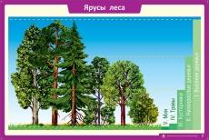 """Комплект таблиц """"Летние и осенние изменения в природе""""  (13 таблиц+32 карточки)"""