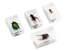 Набор насекомых 2 (Экспонаты в акриле)