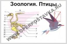 """Фолии """"Зоология. Птицы"""" (12 пленок)"""