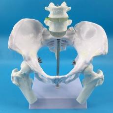 """Модель """"Скелет мужского таза с поясничными позвонками"""""""