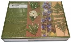"""Гербарий """"Кормовые растения"""" (20 видов)"""