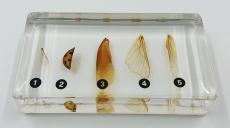 """Коллекция """"Виды верхних конечностей насекомых"""" (акрил)"""