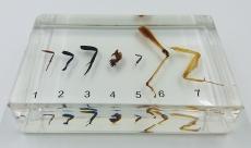 """Коллекция """"Виды нижних конечностей насекомых"""" (акрил)"""