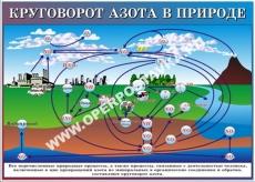 """Виниловая таблица """"Круговорот азота в природе"""" 100х140 см"""