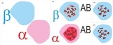 """Модель-аппликация """"Переливание крови. Определение группы крови"""""""
