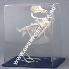 """Модель """"Скелет голубя"""""""