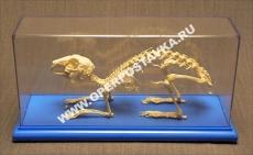 """Модель """"Скелет кролика"""""""