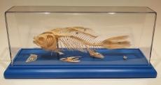 """Модель """"Скелет рыбы"""""""