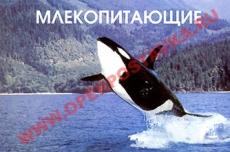 """Слайд-альбом """"Млекопитающие"""" (100 слайдов)"""