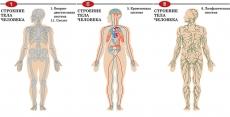 """Комплект таблиц """"Строение тела человека"""" (8 шт, формат А1, лам) + раздаточные карточки"""