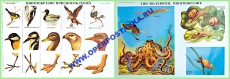 Комплект таблиц по биологии. Курс животные (20 шт, 550х850,лам)