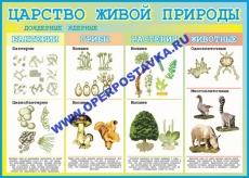 "Виниловая таблица ""Царство живой природы""  100х140 см"
