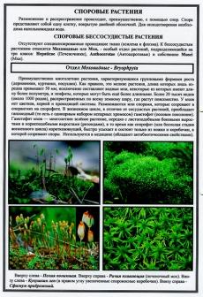 """Гербарий """"Эволюция высших растений"""" (ламинированная)"""