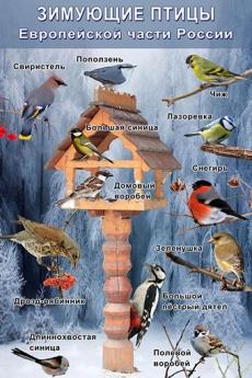 """Виниловая таблица """"Зимующие птицы""""  100х140 см"""